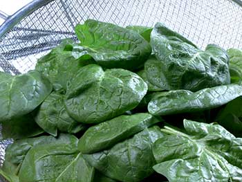 Spinach, a high-iron food