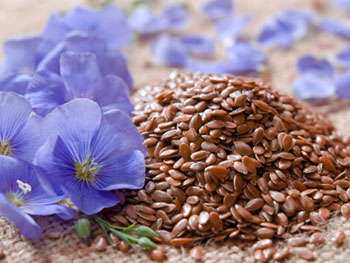 Flaxseeds and flax flowers. Flaxseed oil is a good source of omega-3 fatty acids