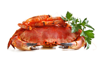 a whole, unshelled crab