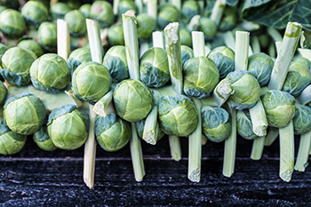 Fresh Brussels sprouts on the stem