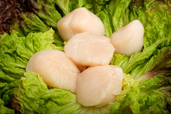 fresh sea scallops on a bed of lettuce