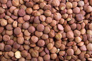What are Lentils? : Ingredient and Nutrition Information from Dr
